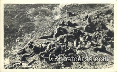 Real Photo - Sea Lions - Misc, Oregon OR Postcard