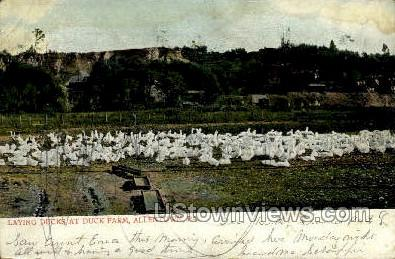 Duck Farm - Allentown, Pennsylvania PA Postcard