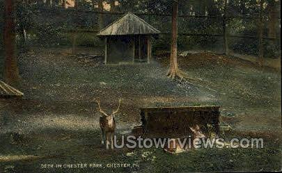 Deer, Chester Park - Pennsylvania PA Postcard