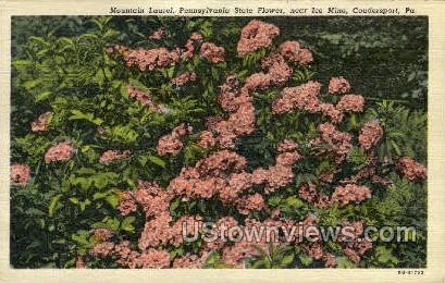 Mountain Laurel, Ice Mine - Coudersport, Pennsylvania PA Postcard