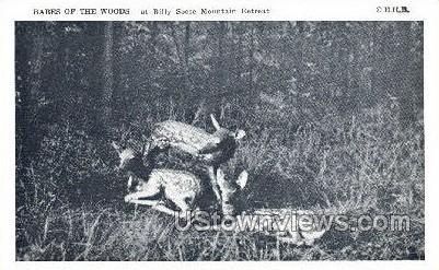 Babes of the Woods - Lake Wallenpaupack, Pennsylvania PA Postcard