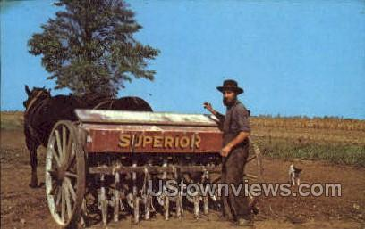 Amish Farmer & Dog - Lancaster, Pennsylvania PA Postcard