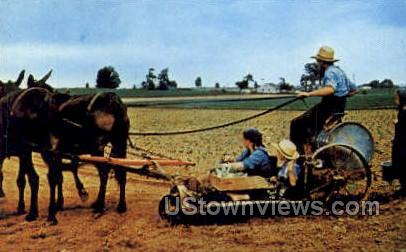 Amish Family, Tobacco Planter - Lancaster, Pennsylvania PA Postcard