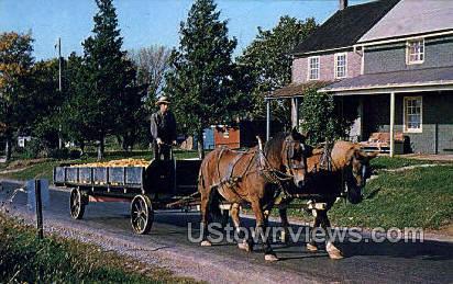 Harvest, Amish Youth - Lancaster, Pennsylvania PA Postcard