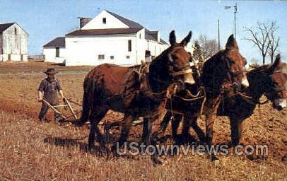 Amish Man Plowing - Lancaster, Pennsylvania PA Postcard