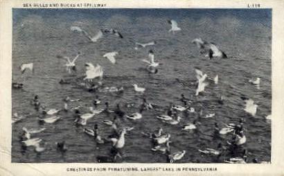 Pymatuning Lake  - Misc, Pennsylvania PA Postcard