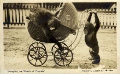 Zoological Garden - Misc, Pennsylvania PA Postcard