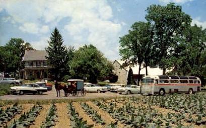 Amish Farm and House - Misc, Pennsylvania PA Postcard