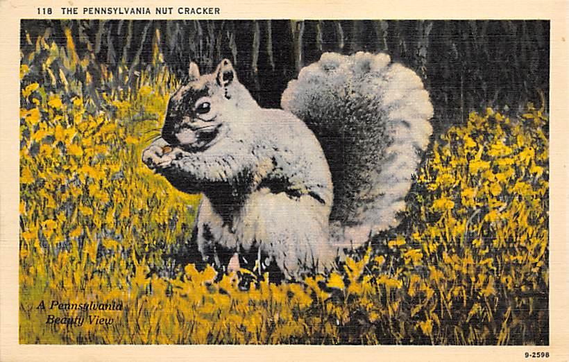 Pennsylvania Squirrel PA