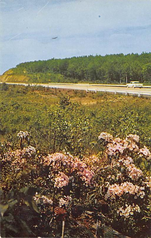 Laurel Blossoms PA