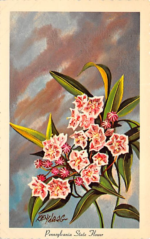 Pennsylvania State Flower PA