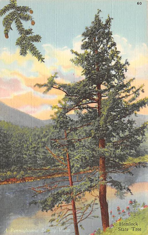 State Tree PA