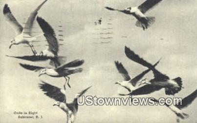 Gulls - Sakonnet, Rhode Island RI Postcard