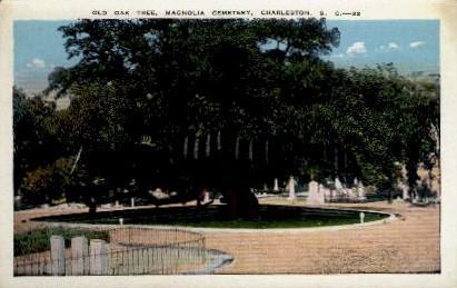 Old Oak Tree, Magnolia Cemetery - Charleston, South Carolina SC Postcard