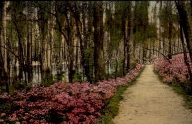 Cypress Gardens - Charleston, South Carolina SC Postcard