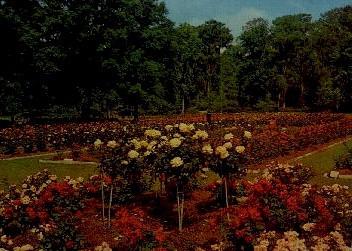 Edisto Gardens - Orangeburg, South Carolina SC Postcard