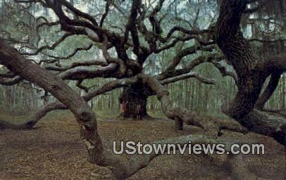Angel Oak - Johns Island, South Carolina SC Postcard