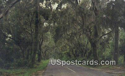 Summerville, SC Postcard     ;     Summerville, South Carolina