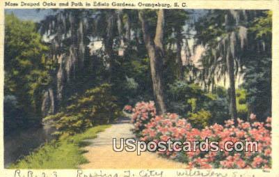 Moss Draped Oaks - Orangeburg, South Carolina SC Postcard