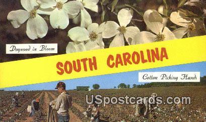 Cotton Picking - Greetings from, South Carolina SC Postcard
