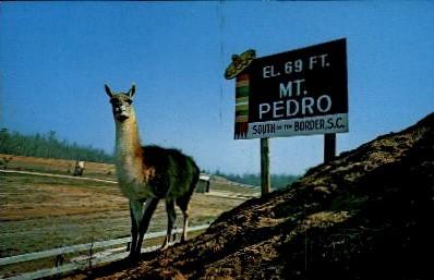 Llama on Mount Pedro - South of the Border, South Carolina SC Postcard