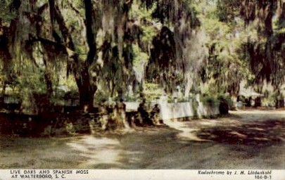 Live Oaks and Spanish Moss - Walterboro, South Carolina SC Postcard
