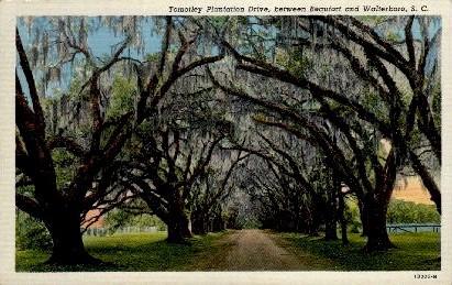 Tomotley Plantation Drive - Walterboro, South Carolina SC Postcard