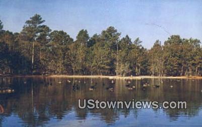 Canadian Geese - Brookgreen, South Carolina SC Postcard