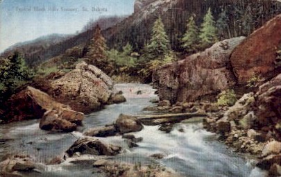Typical Black Hills Scenery - Misc, South Dakota SD Postcard