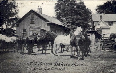 F.J. Nelson Dakota Horses - Misc, South Dakota SD Postcard