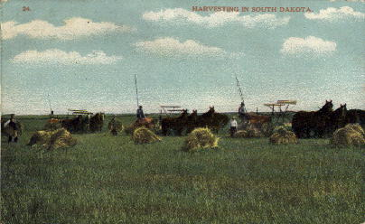 Harvesting in South Dakota - Misc Postcard