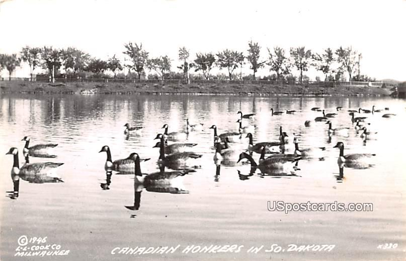 Canadian Honkers - Misc, South Dakota SD Postcard