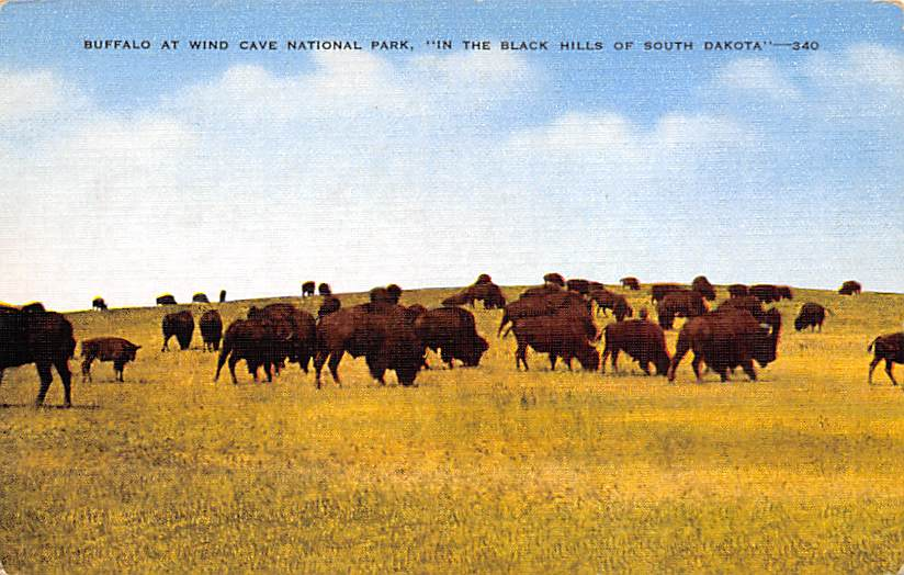 Chinese Gardens - Sioux Falls, South Dakota SD Postcard