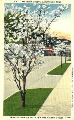 Main Street - Gatlinburg, Tennessee TN Postcard