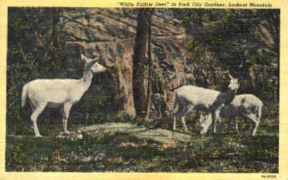 Rock City Gardens - Lookout Mountain, Tennessee TN Postcard