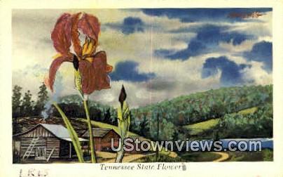 Iris, State Flower - Misc, Tennessee TN Postcard