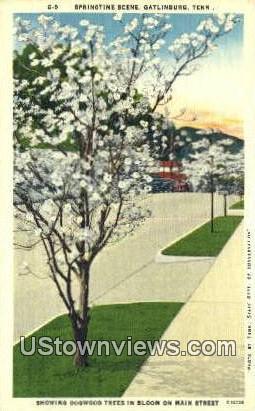 Gatlinburg, Tennessee,, Gatlinburg, TN, Tenn Postcard
