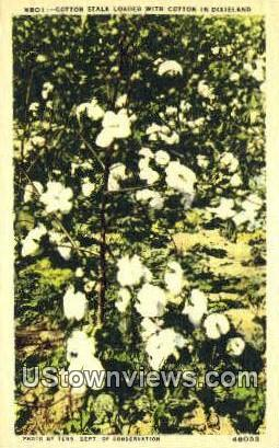 Cotton Stalk - Dixieland, Tennessee TN Postcard