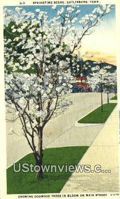 Gatlinburg, TN,, Gatlinburg, Tenn, Tennessee Postcard