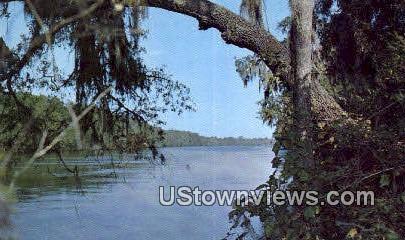 Suwannee River Jungle Drive - Misc, Tennessee TN Postcard