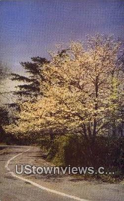 West Brow Road - Lookout Mountain, Tennessee TN Postcard