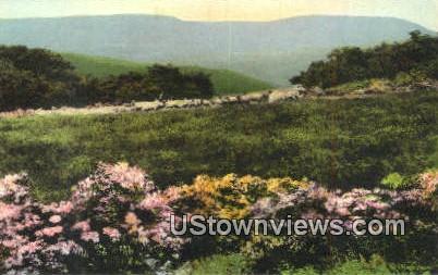 Sheep Grazing - Misc, Tennessee TN Postcard