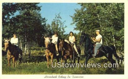 Horseback Riding - Misc, Tennessee TN Postcard