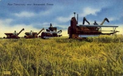 Rice Threshing - Beaumont, Texas TX Postcard