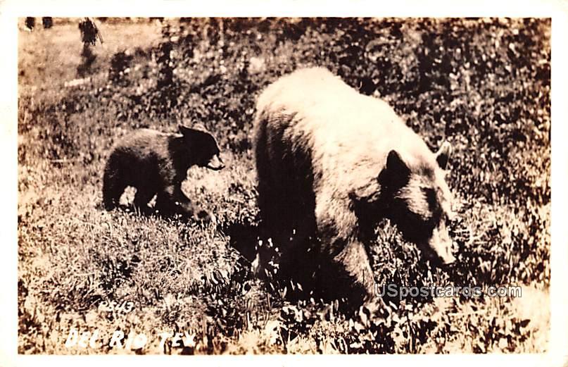 Mama Bear and Cub - Del Rio, Texas TX Postcard