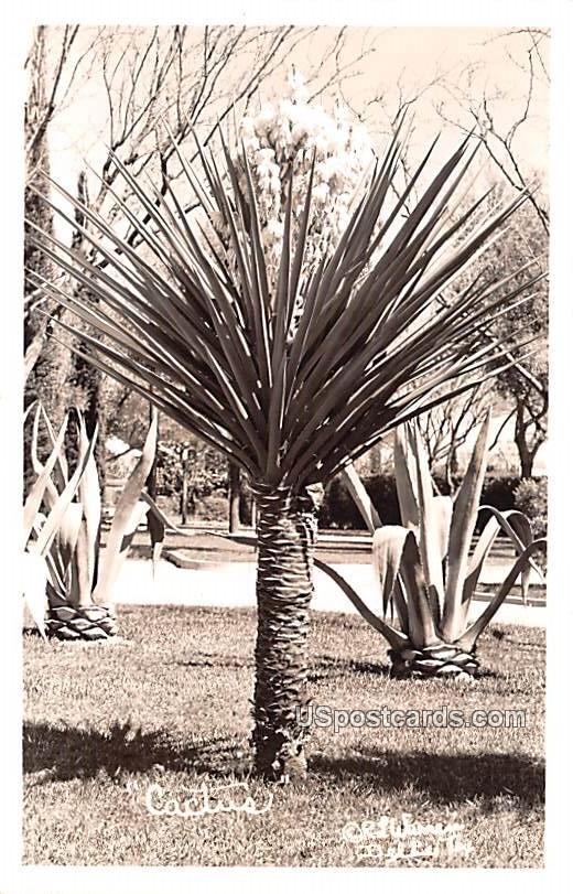 Cactus - Del Rio, Texas TX Postcard