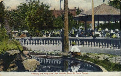 Feeding The Alligators - El Paso, Texas TX Postcard