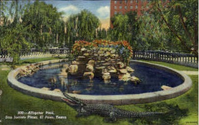 Alligator Pool - El Paso, Texas TX Postcard