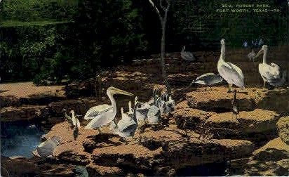 Zoo, Forest Park - Fort Worth, Texas TX Postcard