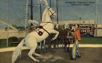 Community Circus - Gainesville, Texas TX Postcard